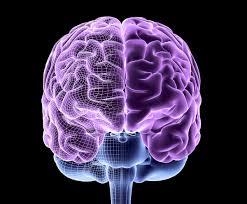 نقطه گذاری مغز